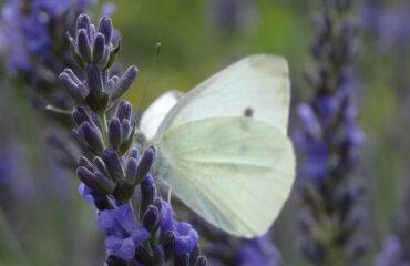 Permakultur im Naturhof: Infoseite jetzt online thumbnail